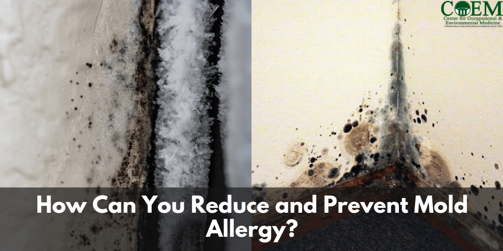 How Can You Reduce and Prevent Mold Allergy?