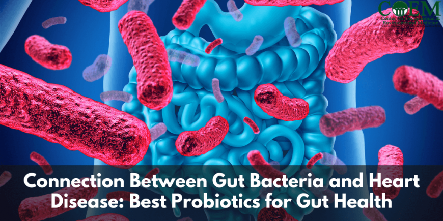Connection Between Gut Bacteria and Heart Disease: Best Probiotics for Gut Health